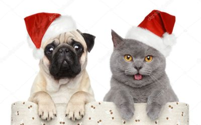 Cuidados com os Pets nas festas de fim de ano